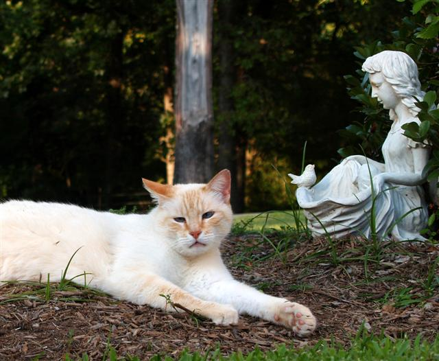 Will in Tejas   One of our cats lounging in the shrub beds.