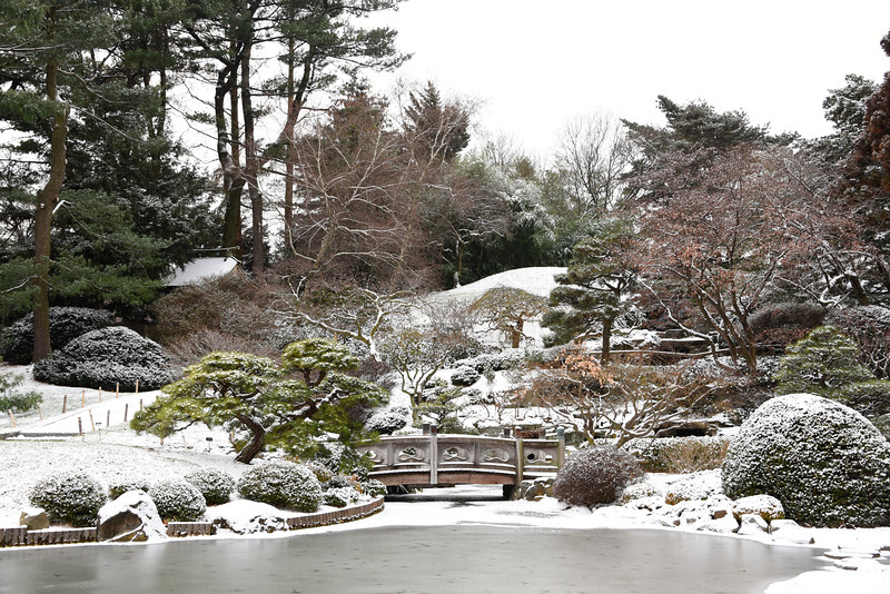 DSC_2225_snow_in_the_japanese_garden_lg.jpg