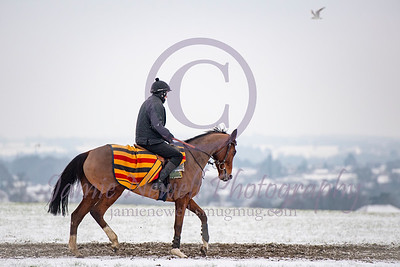 British Horse Racing Winter 2019