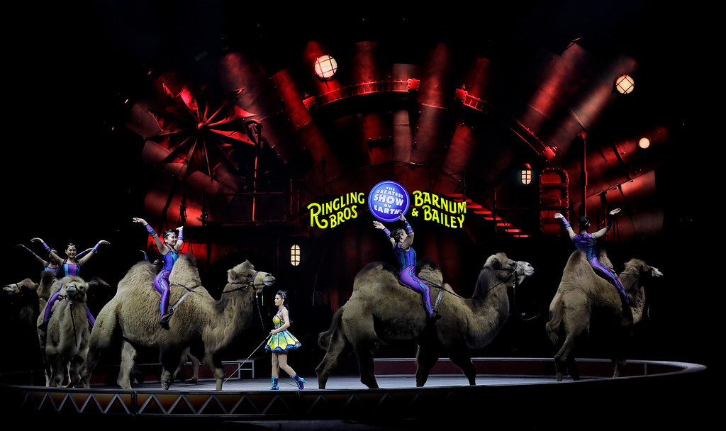 ". Ringling Bros. and Barnum & Bailey performers ride camels during a performance Saturday, Jan. 14, 2017, in Orlando, Fla. The Ringling Bros. and Barnum & Bailey Circus will end the ""The Greatest Show on Earth\"" in May, following a 146-year run of performances. Kenneth Feld, the chairman and CEO of Feld Entertainment, which owns the circus, told The Associated Press, declining attendance combined with high operating costs are among the reasons for closing. (AP Photo/Chris O\'Meara)"