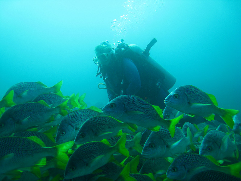 Diving in the Galapagos (71 of 392)