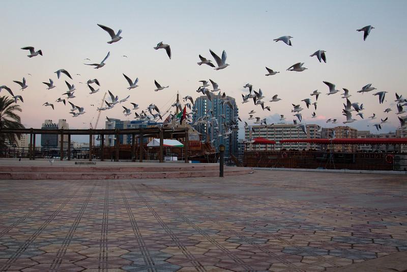 Sea gulls in Dubai