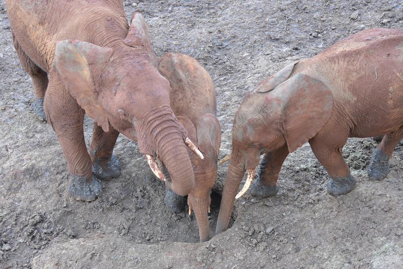 East Africa Safari 67.jpg