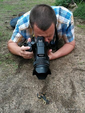 Scorpion Photography