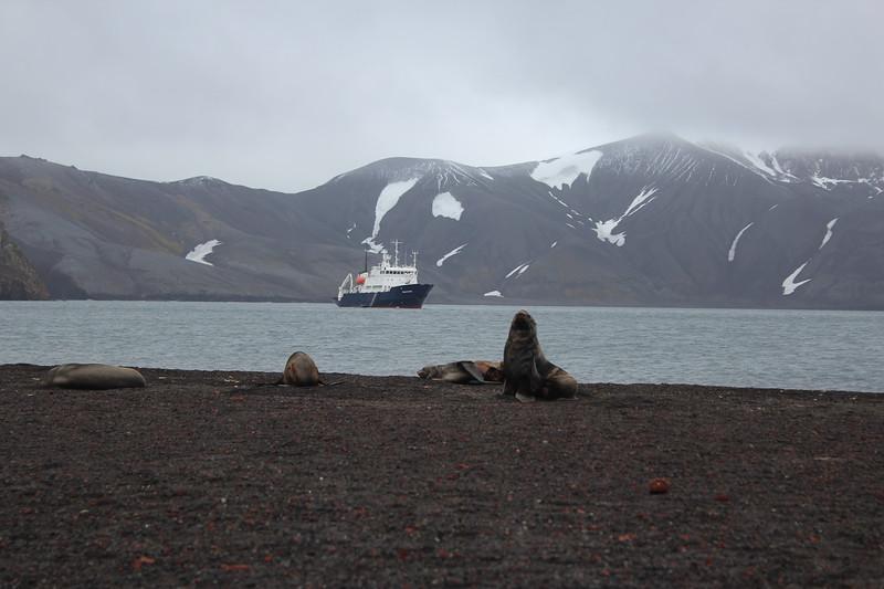 Antarctica 085.JPG