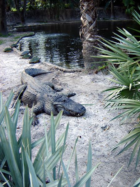 Pictures taken in Charleston during the GWU Choir's Spring Break Tour. This crocodile looks menacing sitting at Busch Gardens!