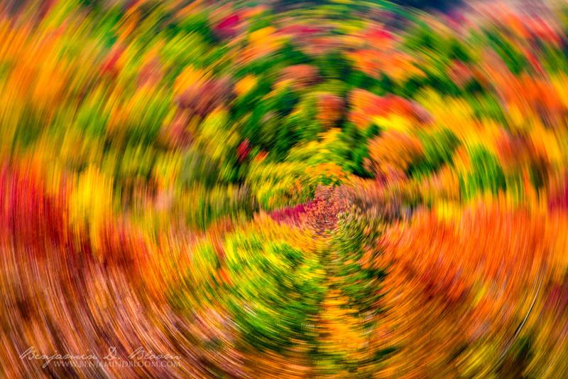 2020 Abstract Foliage 3