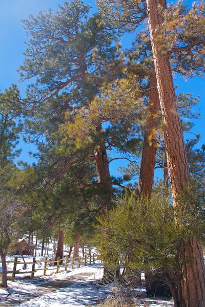 Mojave Desert & Red Rock Canyon, Vegas-DSC_2181-060.jpg