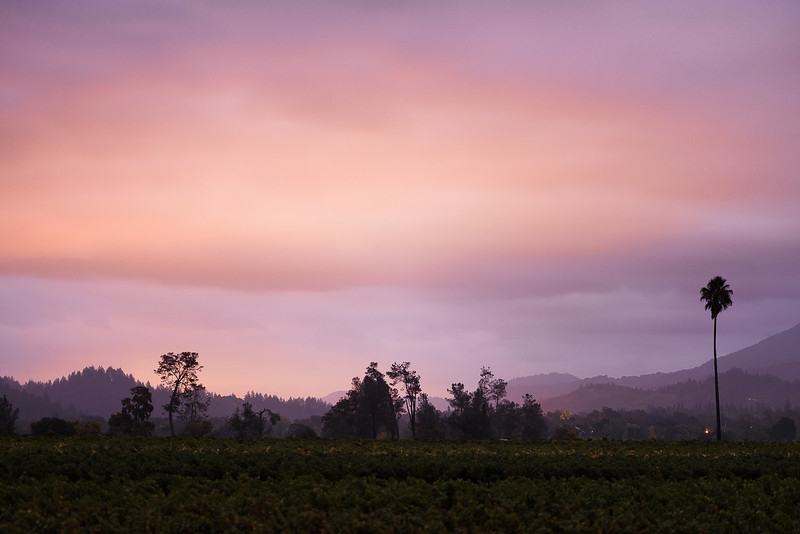 Three(One)_Palms_Vineyard_2048-.jpg