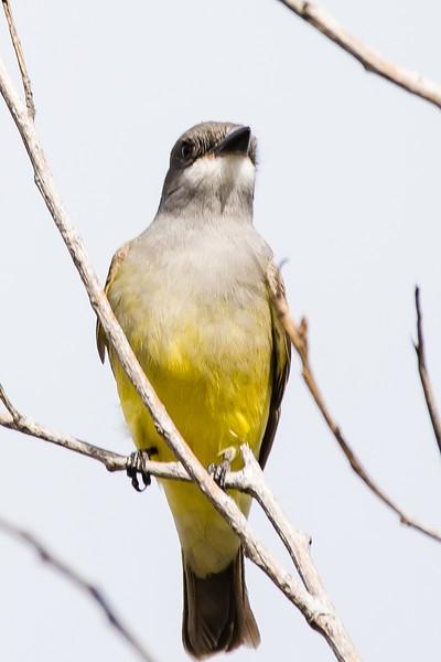 Jan. 15, 2017 San Joaquin Wildlife Sanctuary