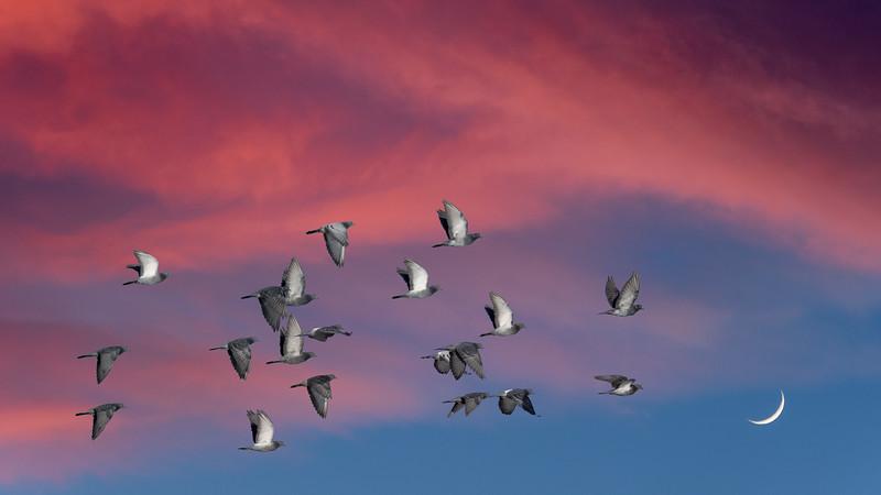00 0020 Pigeon Moonset 16x9.jpg