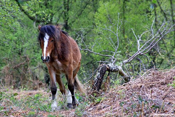 Horses - Set 7