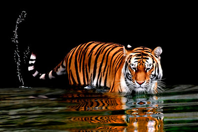 INDIAN WILDLIFE