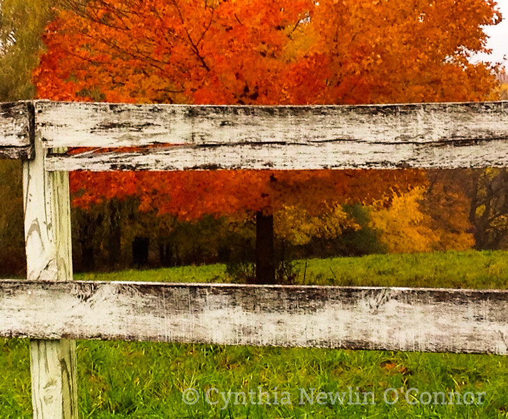 fall fence and tree for canvas.jpg