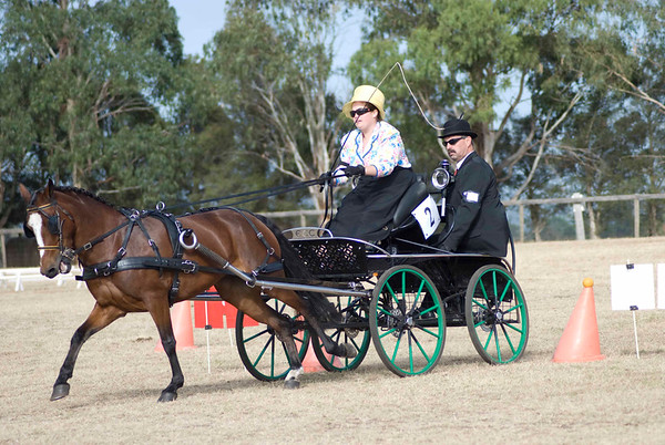 Victorian Carriage Driving Champs - Gallery 9