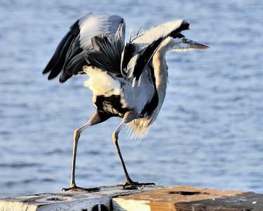 110603 Birds Waterfront