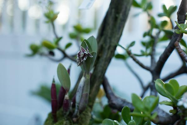 Plant and Garden Photos 2019