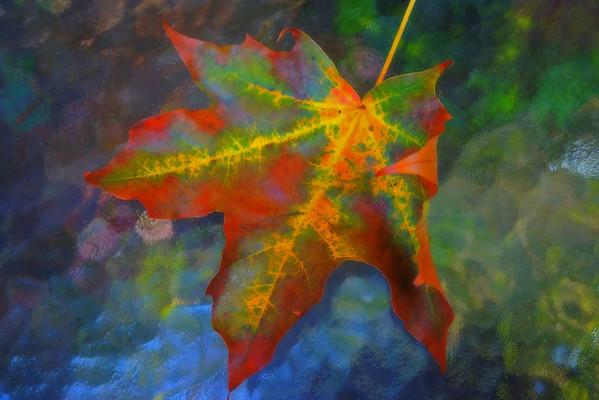 Leaf Portraits 2014