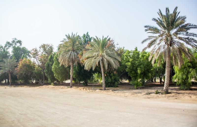 Abu Dhabi-1065.jpg