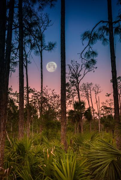 Audubon Corkscrew Swamp