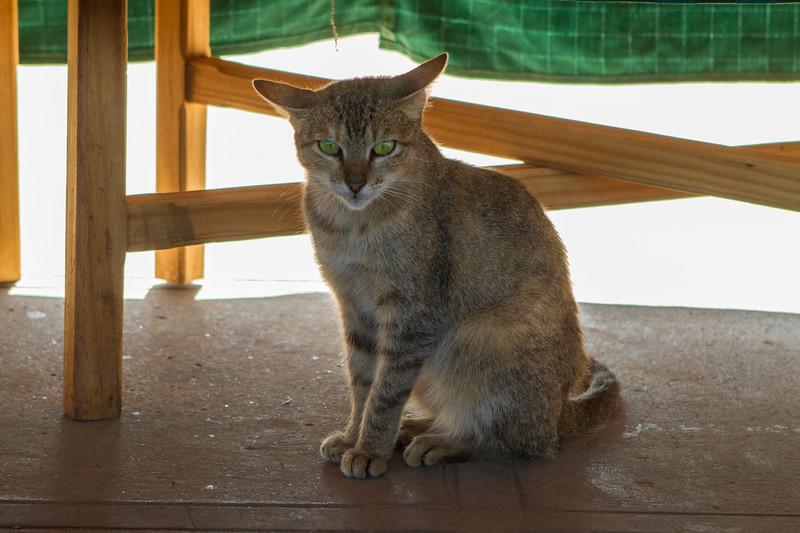 kiel-cats-03.jpg