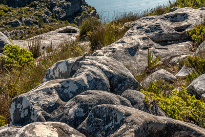 Table Mountain_2710