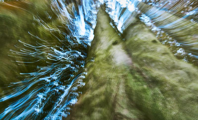 Tree Trunks & Sky -- Moving Lens Effect 1