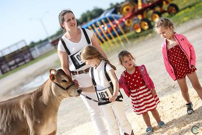 Ontario Summer Jersey Heifers 2018