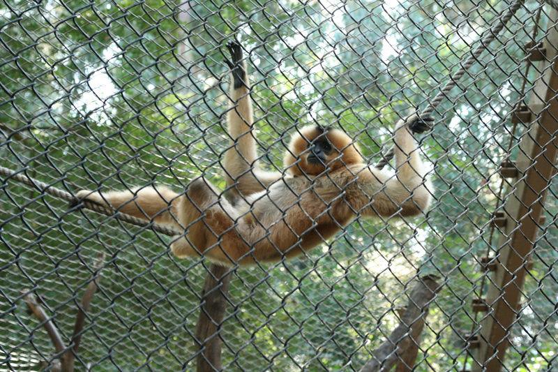 monkey relaxing.jpg
