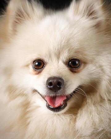 20160408 Dog Portraits