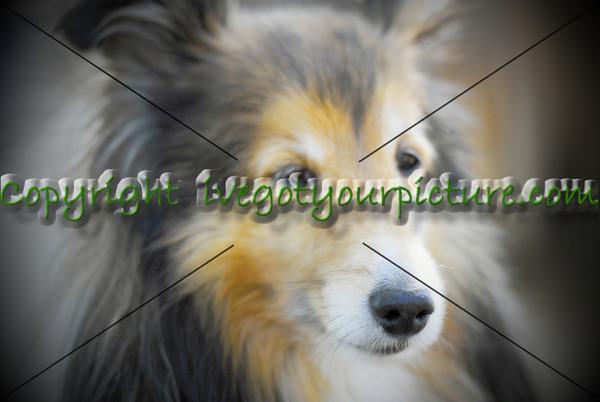 Canine Portfolio