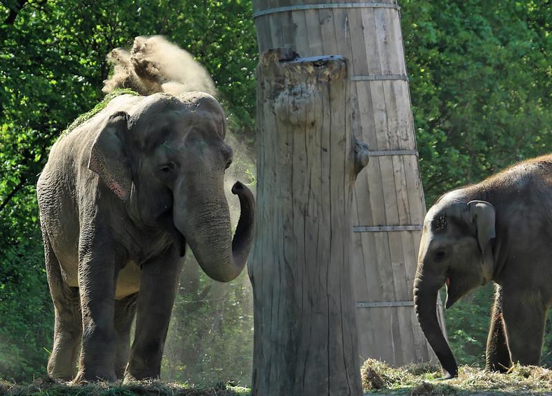 1D3L7315 zoo.jpg