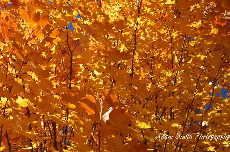 Sea-of-fall-colors.JPG