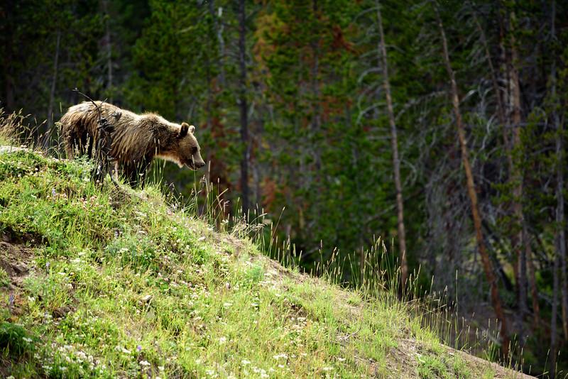 150721 - Yellowstone - 2493.jpg