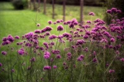017 fuzzy flowers lucas spring04 0020
