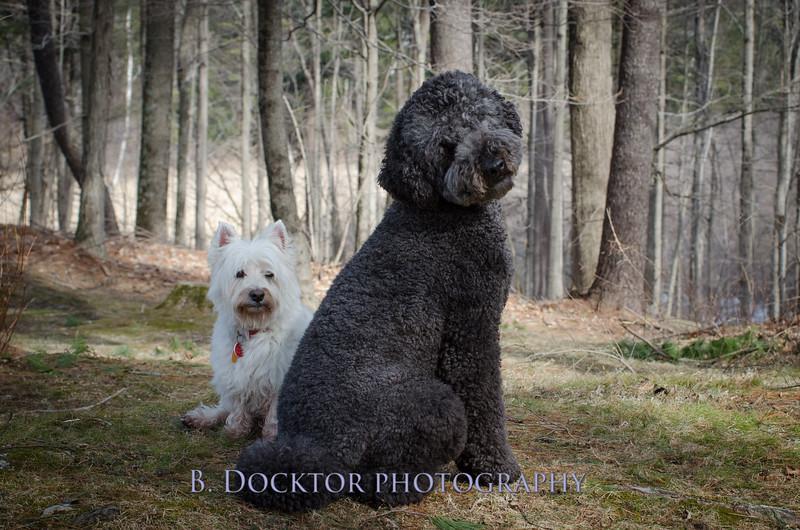 1504_Bear and Charlie_104.jpg