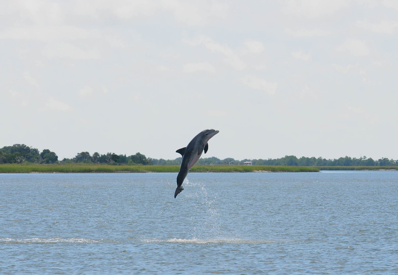 Excited Dolphin AIR .jpg