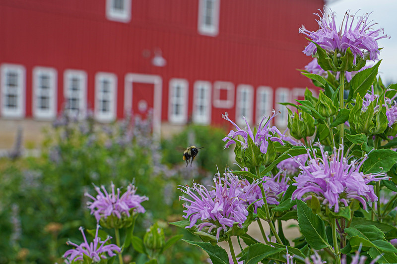 Arboretum, July Harvest-81.JPG