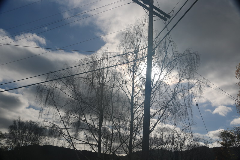 Winter birch tree in front of dramatic clouds