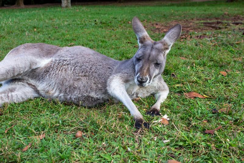 Australia_292.jpg
