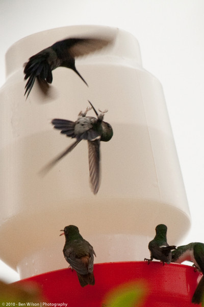 Hummers looking for position
