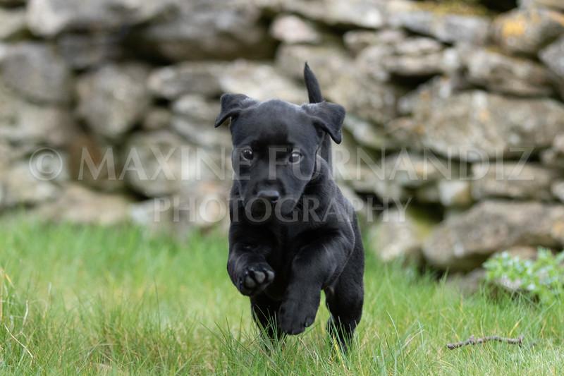Weika Puppies 24 March 2019-6390.jpg
