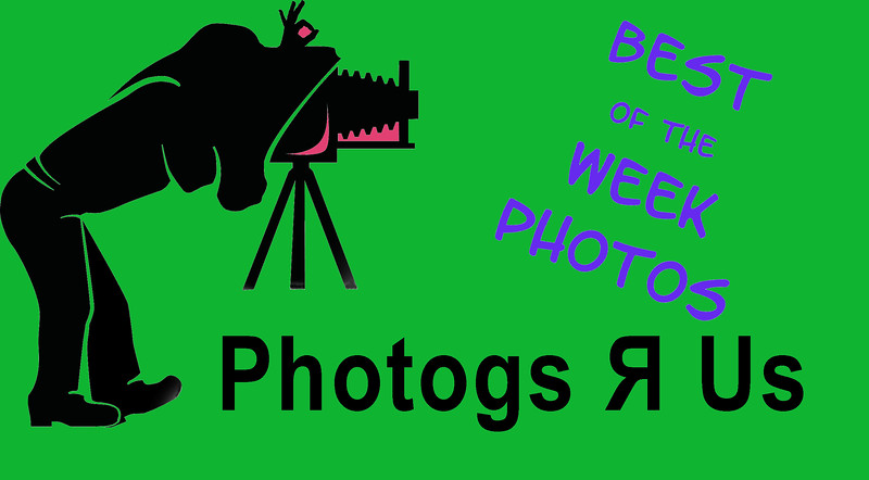 Photogs Best Weekly Photos