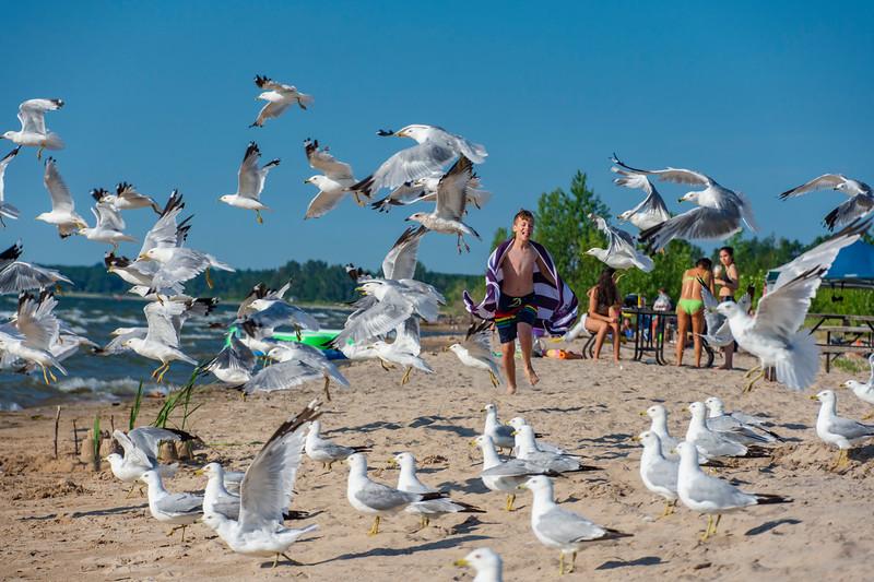 Elijah-Wasaga-Beach-Gulls.jpg