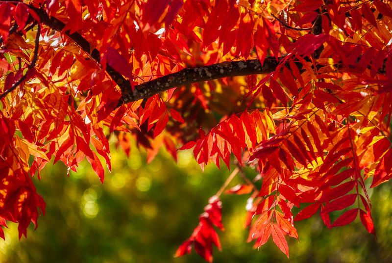 Autumn Foliage, Campbell Park, Campbell, California, 2010
