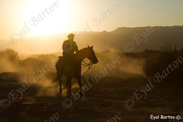 Horses -סוסים