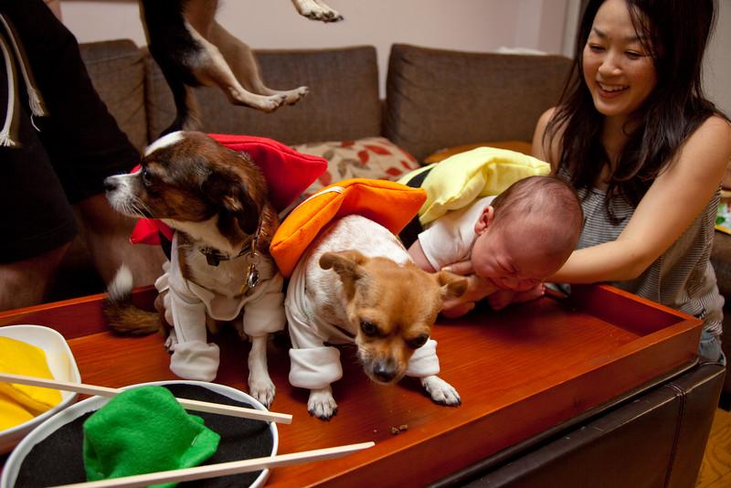 Dog-sushi-halloween-63.jpg