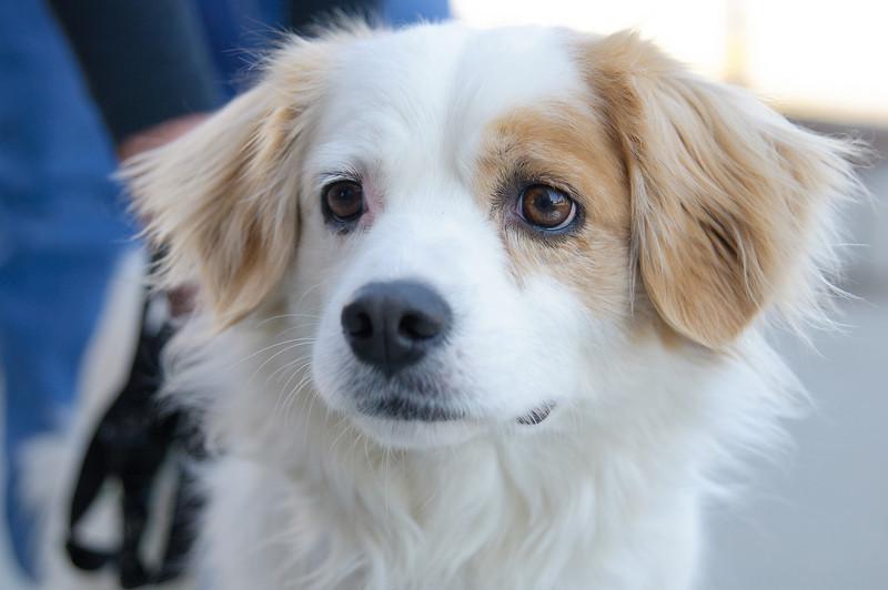 20110312 PetSmart Adoption Event-67.jpg