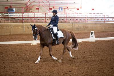Horse 463