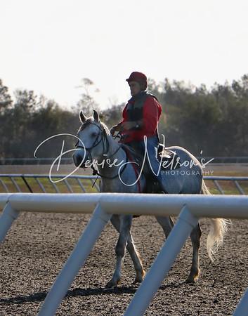 Ocala Horse Farms
